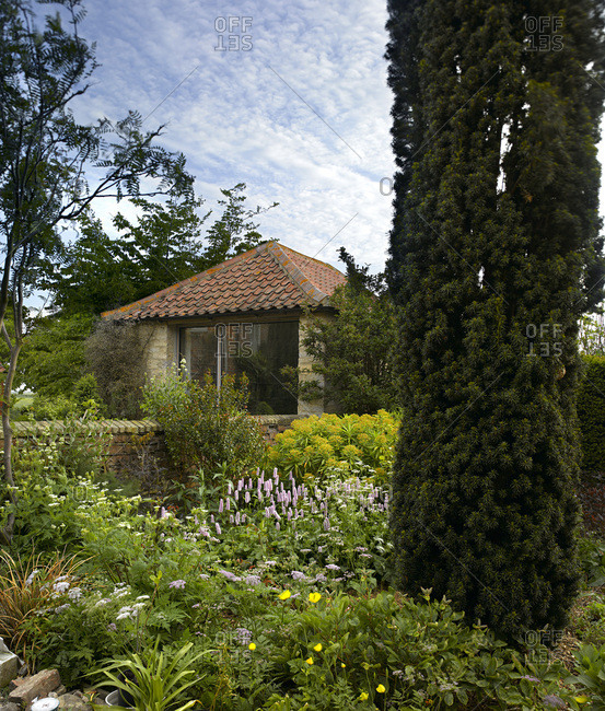 Exterior view of a refurbished barn in a Lincolnshire garden with English Yew tree in the foreground