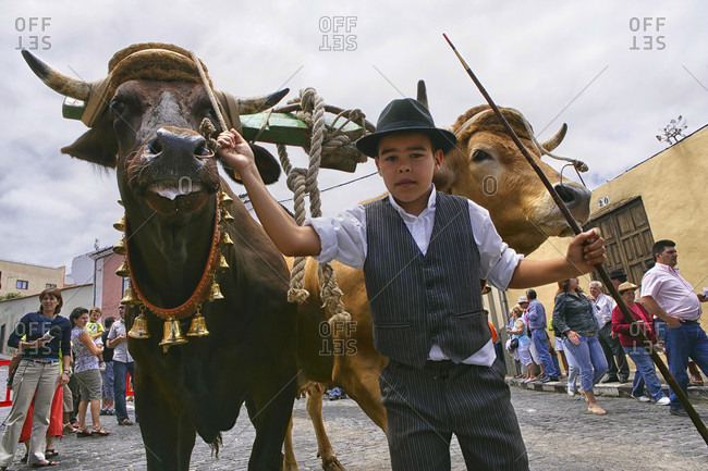 May 29, 2015: A Herder In A Traditional Attire With An Oxen In Santa Cruz De Tenerife City, Spain