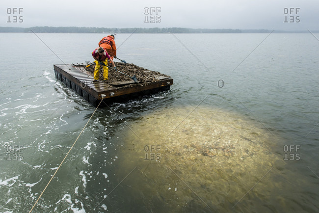September 6, 2016: A Barge Full Of Oysters And Volunteers Above An Artificial Reel Of Recycled Oyster Shells In New Hampshire