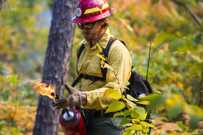 September 26, 2014: A Fire Fighter Working With A Drip Torch In A Forest In New Hampshire