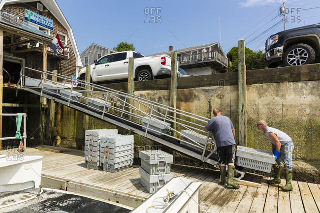 July 14, 2016: Crew Loading Bins Of Lobsters On A Conveyer Belt, Harpswell, Maine