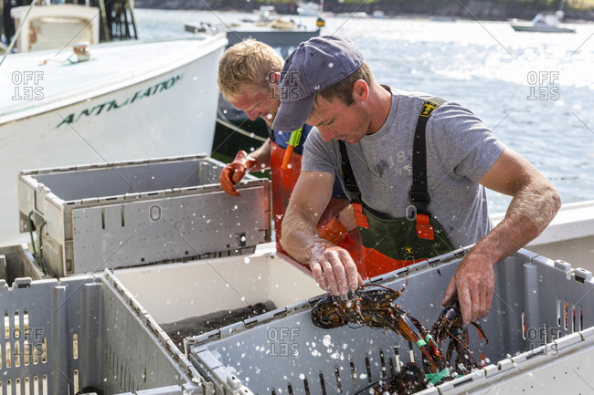July 14, 2016: A Captain Unloading Lobster Aboard At Potts Harbor Lobster In Harpswell, Maine