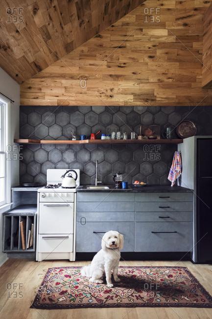 Upstate New York - June 10, 2017: Tibetan terrier in a kitchen