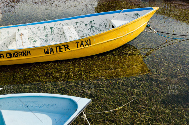 Water taxis floating above turtlegrass, while attached to piers, West End, Roatan, Honduras