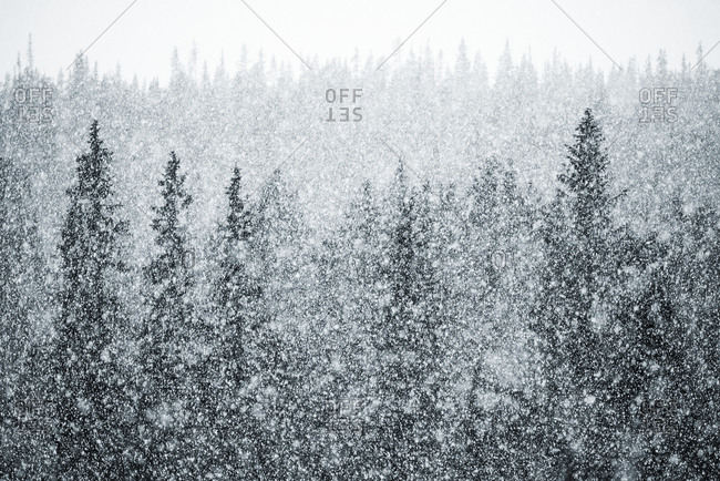 Elevated view of forest during blizzard