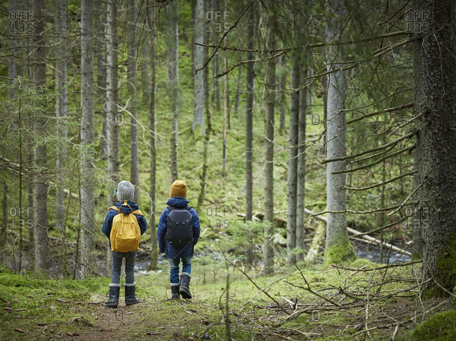 Boys walking in forest