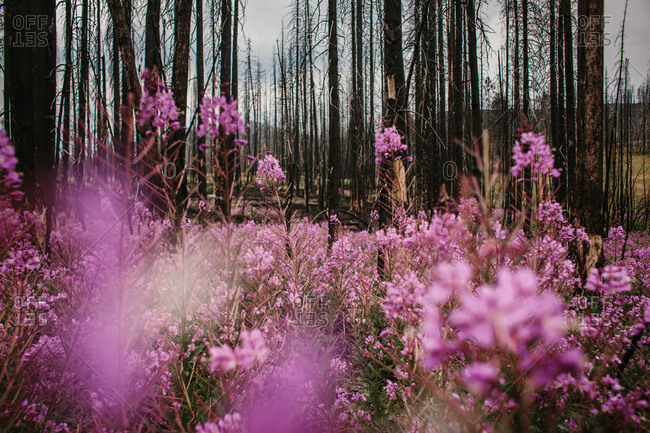 Wildflowers blooming by woods - from the Offset Collection