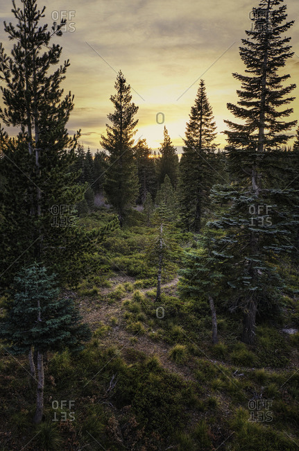 A small trail in the woods leading further into the wilderness at sunset