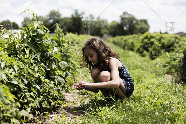 Girl picking raspberries