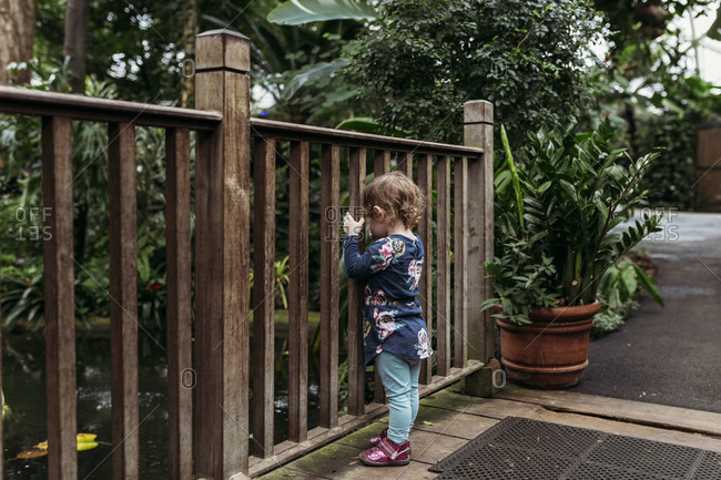 Little girl looking through railing at koi pond