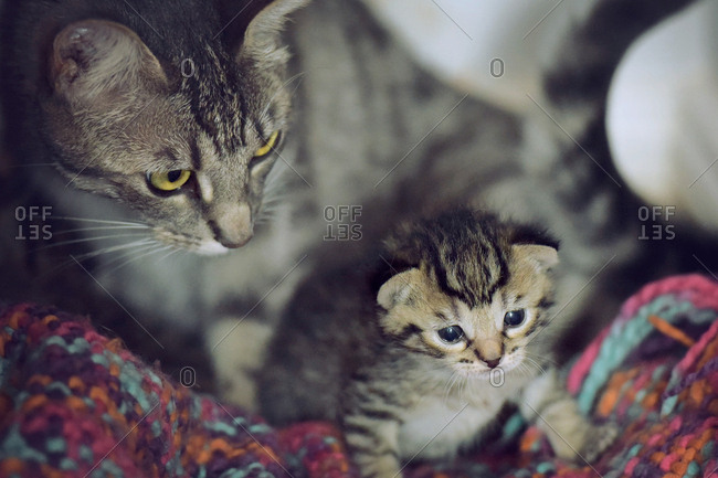 Mother cat with her newborn kitten