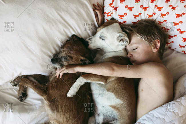 Overhead view of shirtless boy sleeping with dogs on bed