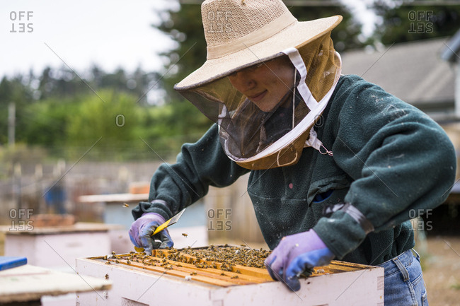 Female beekeeper inspecting beehive at farm