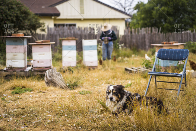 Dog resting on grassy field with beekeeper working in background