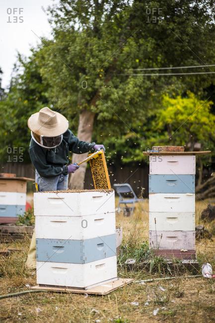 Female beekeeper working at farm