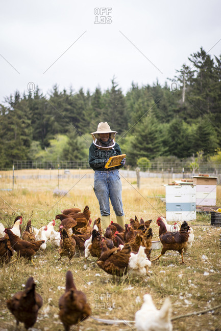 Female beekeeper working at farm with hens in foreground