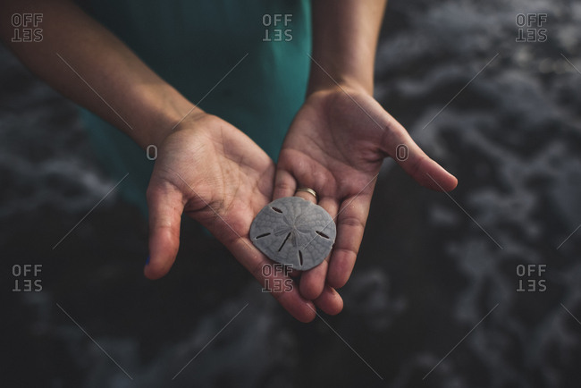 Cropped hands of woman holding sand dollar at beach
