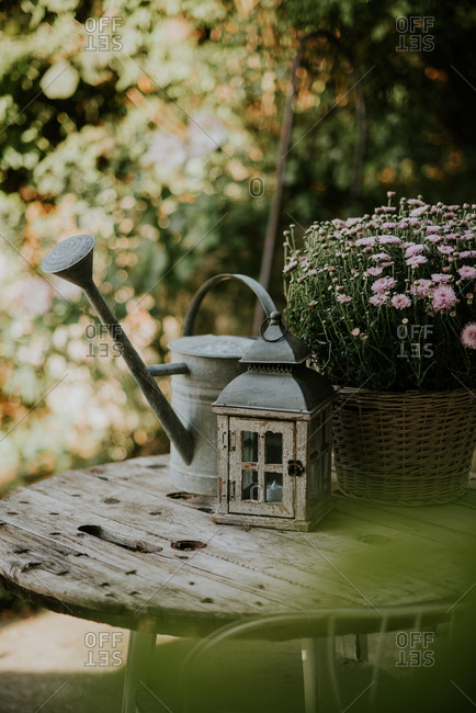 Lantern and watering can on a table beside pink mums