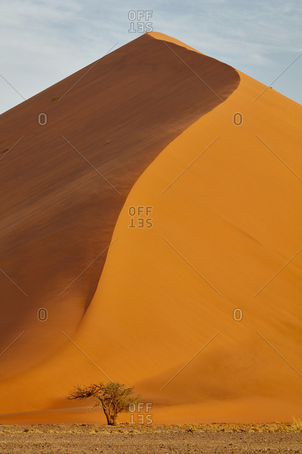 Sand dune with tree at its base