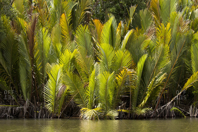Tropical vegetation growing along riverbank