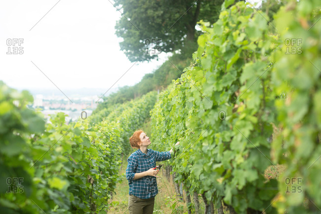 Woman working in vineyard, Baden-Wurttemberg, Germany