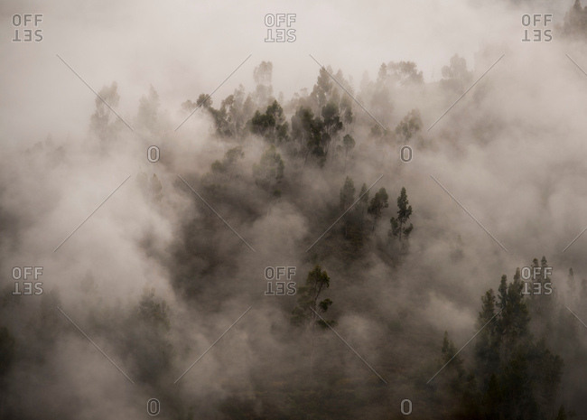 Morning fog in a forest above Tarma, Junin, Peru, South America