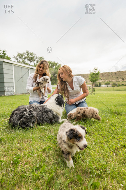 Two young women playing with puppies on ranch, Bridger, Montana, USA