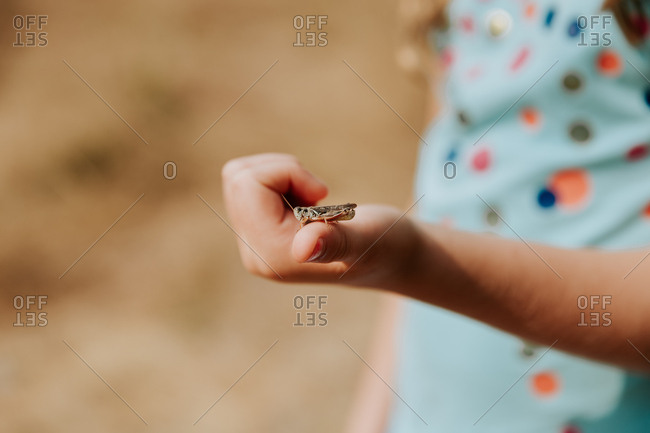 Grasshopper in child's hands