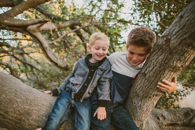 Boys playing in tree