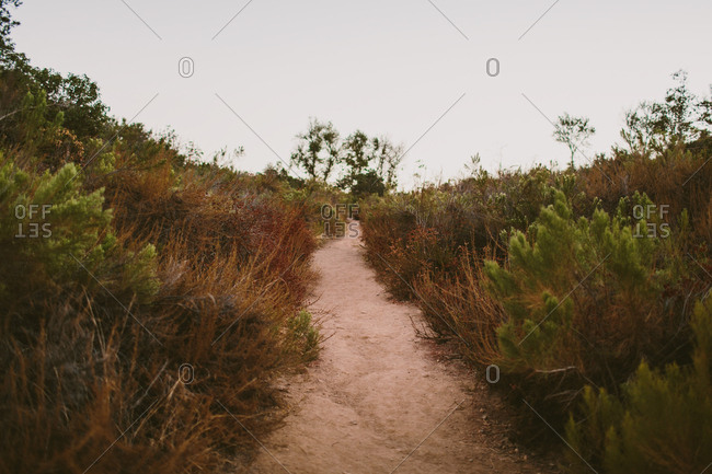 A hiking trail through scrub