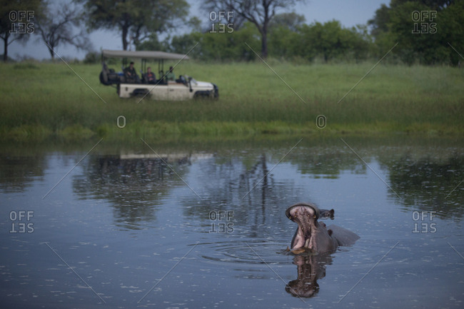 Hippo pond with safari vehicle in background
