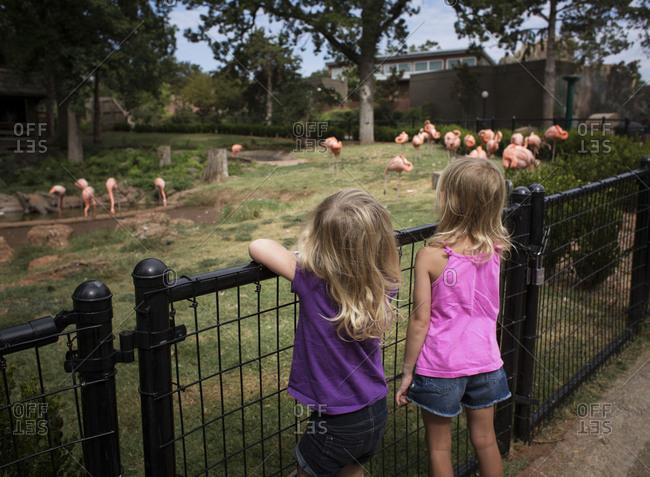 Girls looking at flamingo flock