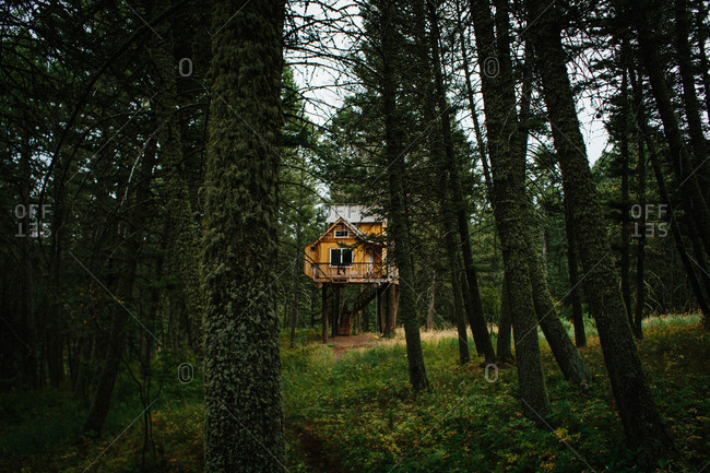Elevated cabin in woods