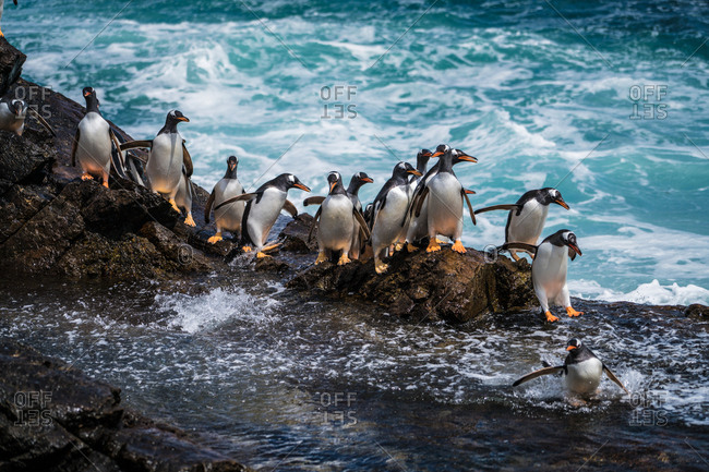 Penguins waddling across a rocky outcrop
