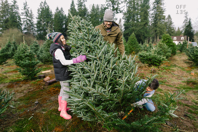 Boy cutting down Christmas tree with family