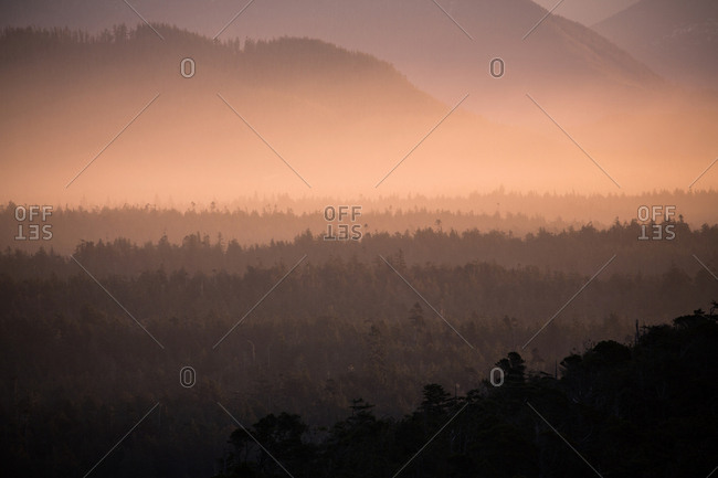 A forest in mist by mountain