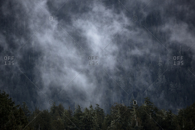 Cloud cover over mountain forest