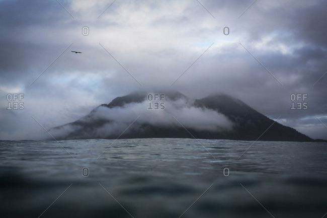 Bird over a cloudy shoreline