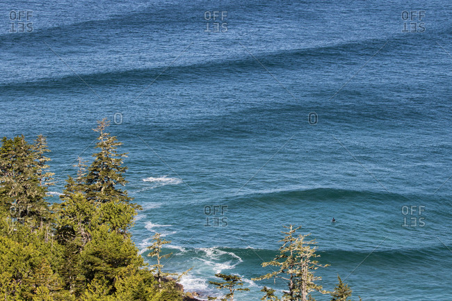 Surfer in sea by pine shore