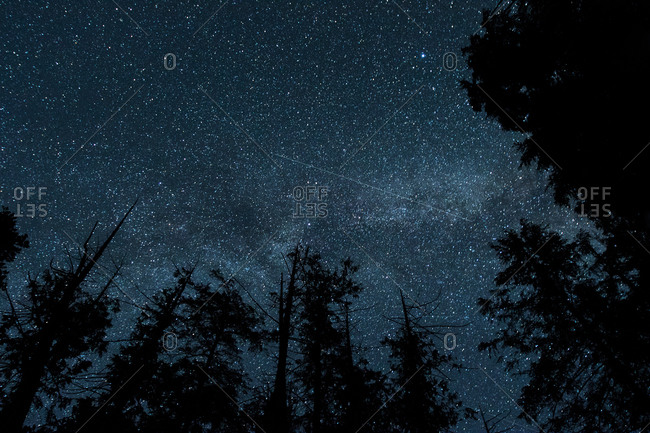 Sky over woods at night