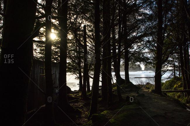 Cabin in woods near sea