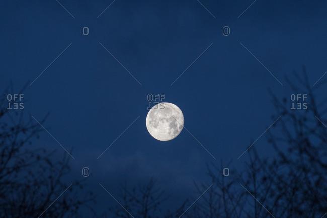 Moon seen over trees