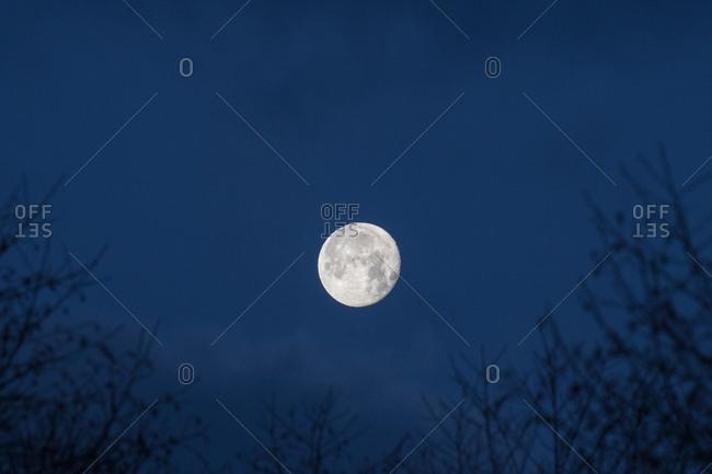 Moon seen over trees