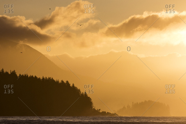 Glowing sunlight off forested coast