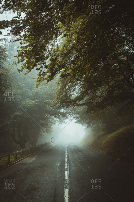 Paved roadway running away in fog among green trees in forest.