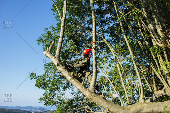 Professional man in uniform hanging on tree and sawing tree trunk.