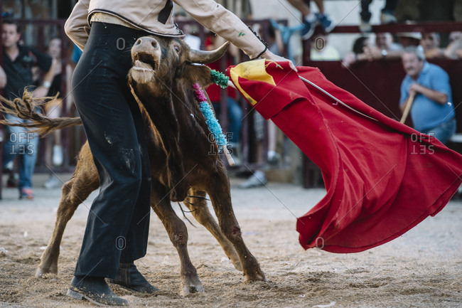 Accident. Matador  Fighting in a typical Spanish Bullfight