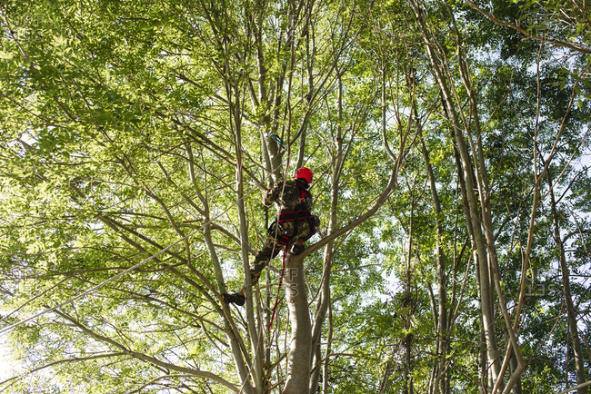 Man trimming trees in woods