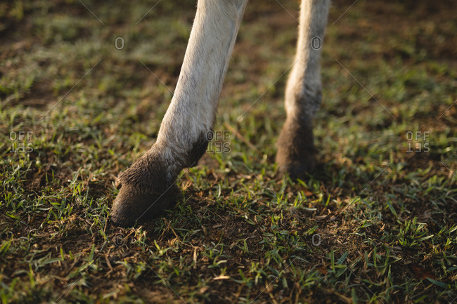 Low section of foal standing on grassy field