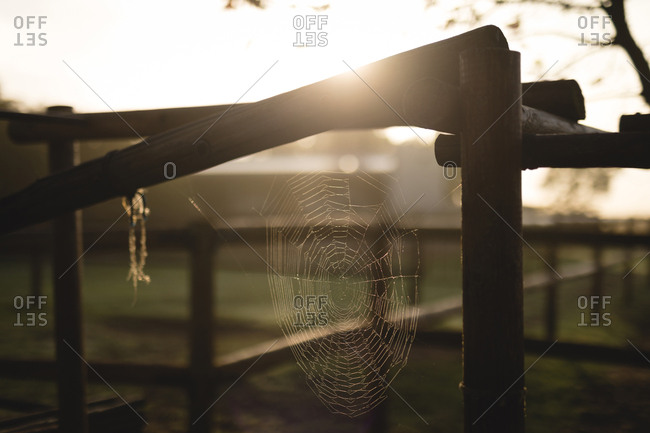 Close-up of spider web on wooden fence